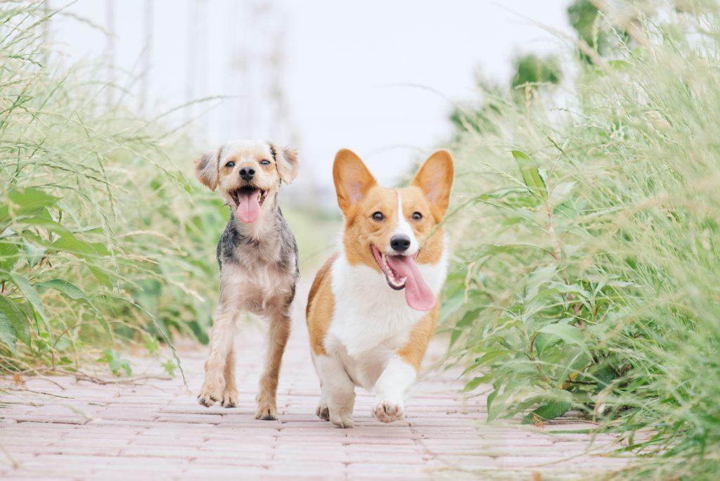 Photo chiens